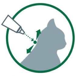 pipette anti puce chat chien