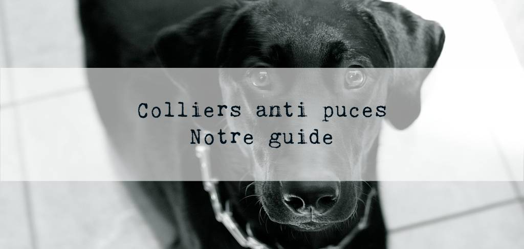 colliers anti puces