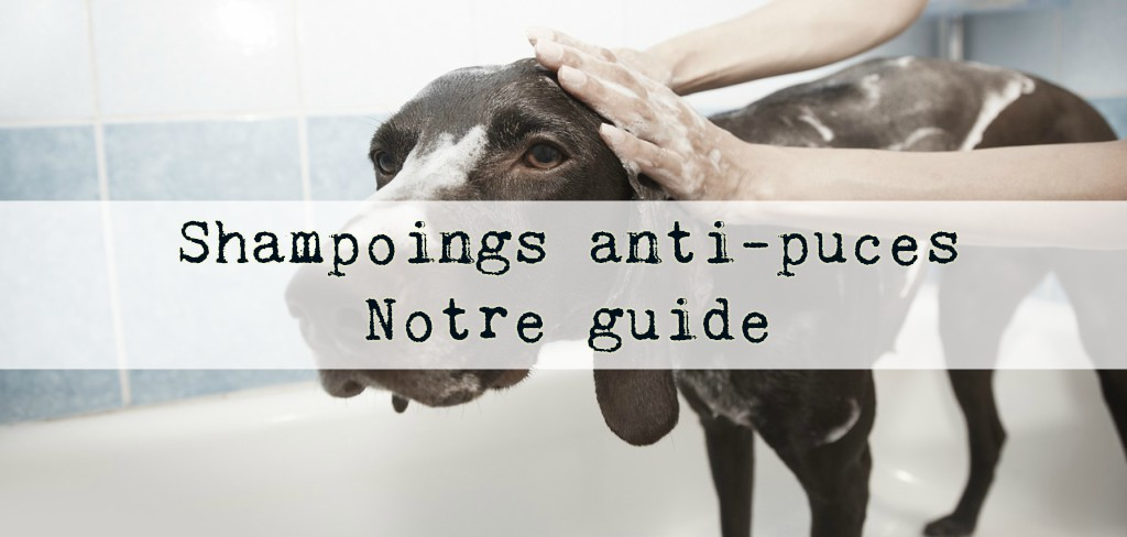 shampoing anti puce chat chien