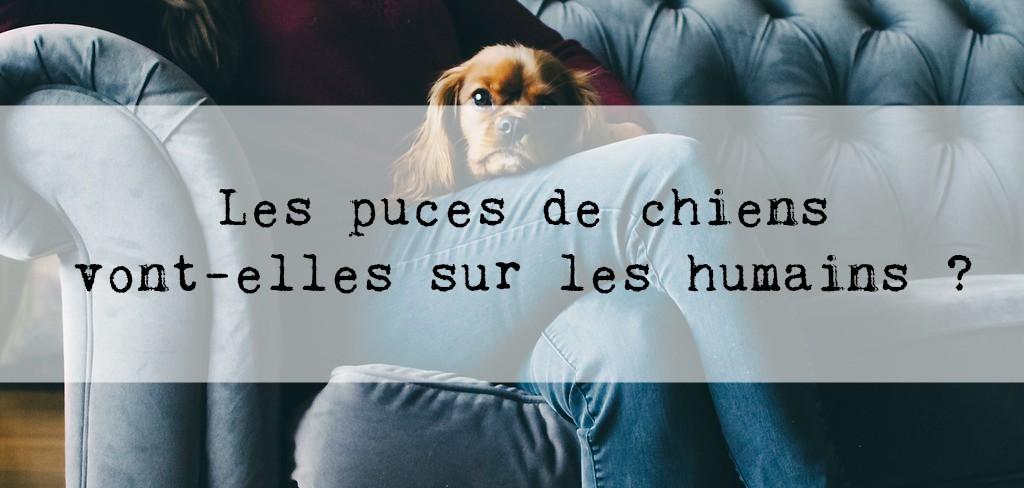 Les puces de chiens vont elles sur les humains