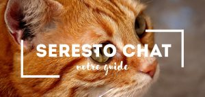 Collier Seresto Chat