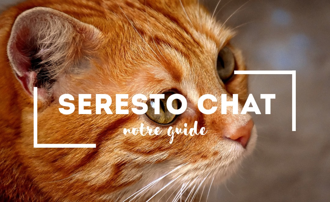 seresto chat avis