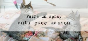 Faire un spray anti puce maison