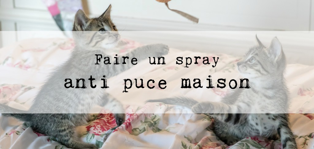 spray anti puce maison