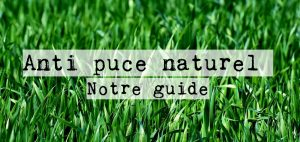 Anti puce naturel : Notre guide