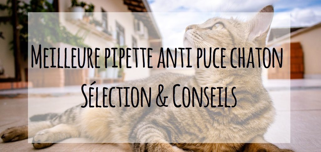 pipette anti puce chaton