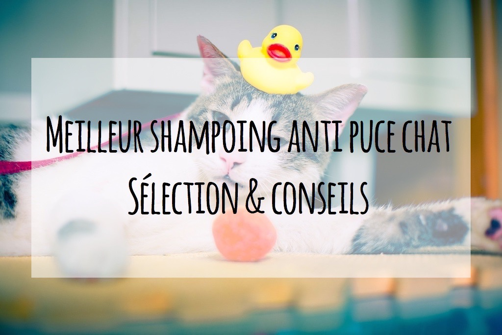 shampoing anti puce chat pharmacie