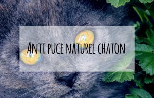 Anti puce naturel chaton