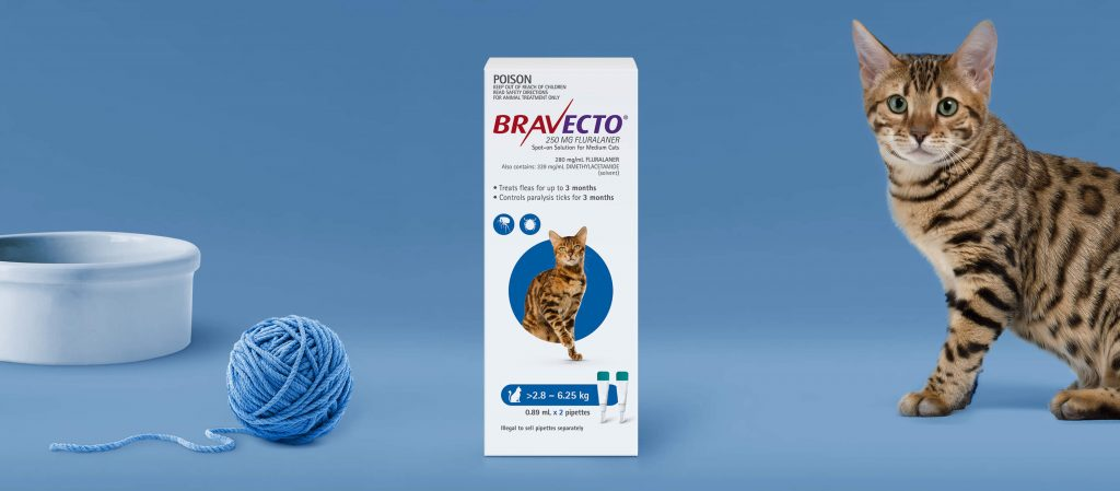 bravecto pipette chat