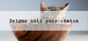peigne anti puce chaton picks