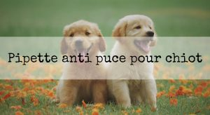 pipette ani puce chiot