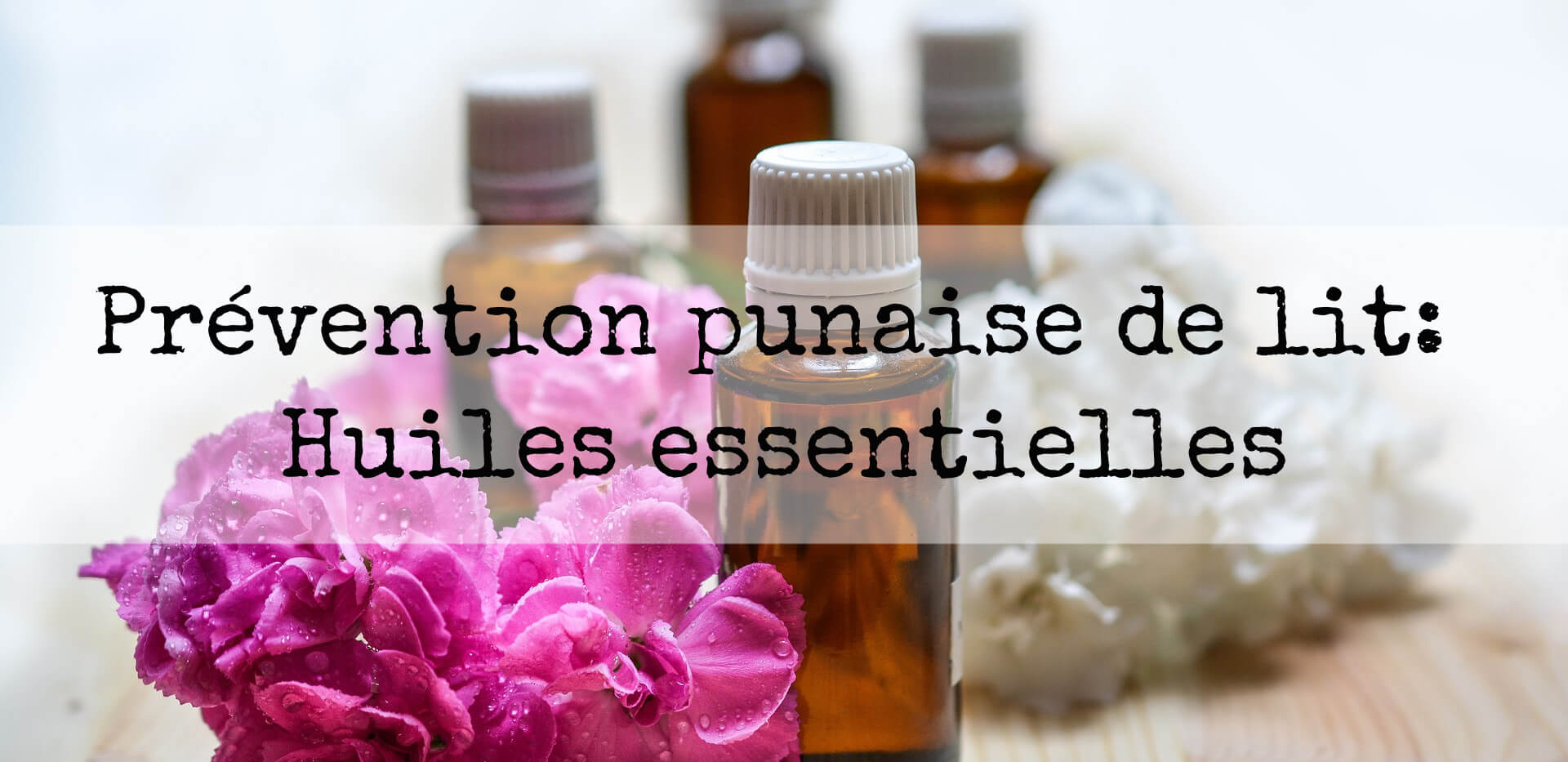 prevention punaise de lit